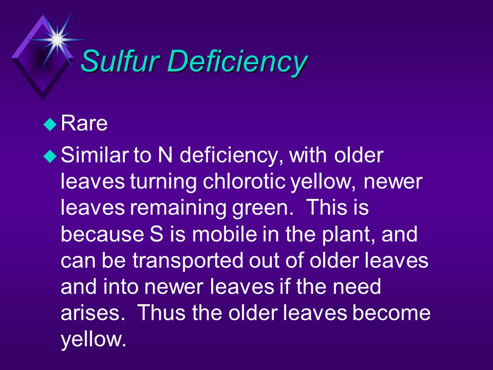 Sulfur Deficiency u Rare u Similar to N deficiency, with older leaves turning chlorotic yellow, newer leaves remaining green. This is because S is mob
