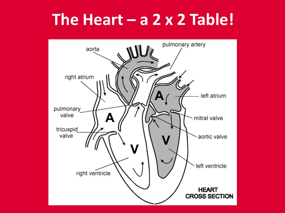 The Heart – a 2 x 2 Table! A V V A