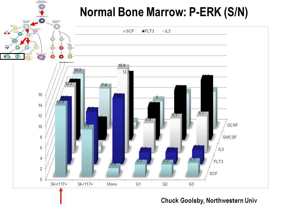 Normal Bone Marrow: P-ERK (S/N) Chuck Goolsby, Northwestern Univ