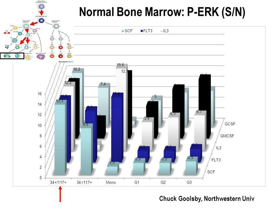 Normal Bone Marrow: P-ERK (S/N) Chuck Goolsby, Northwestern Univ