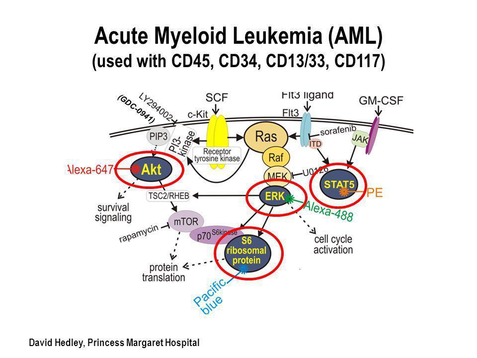 Acute Myeloid Leukemia (AML) (used with CD45, CD34, CD13/33, CD117) David Hedley, Princess Margaret Hospital (GDC-0941)