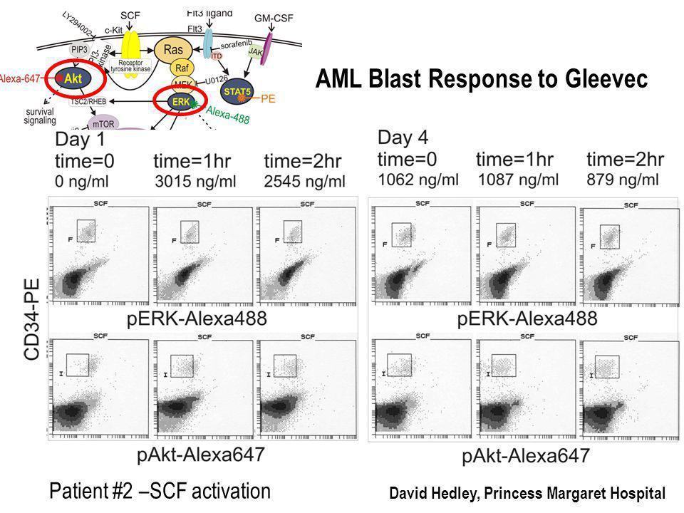 Patient #2 –SCF activation David Hedley, Princess Margaret Hospital AML Blast Response to Gleevec