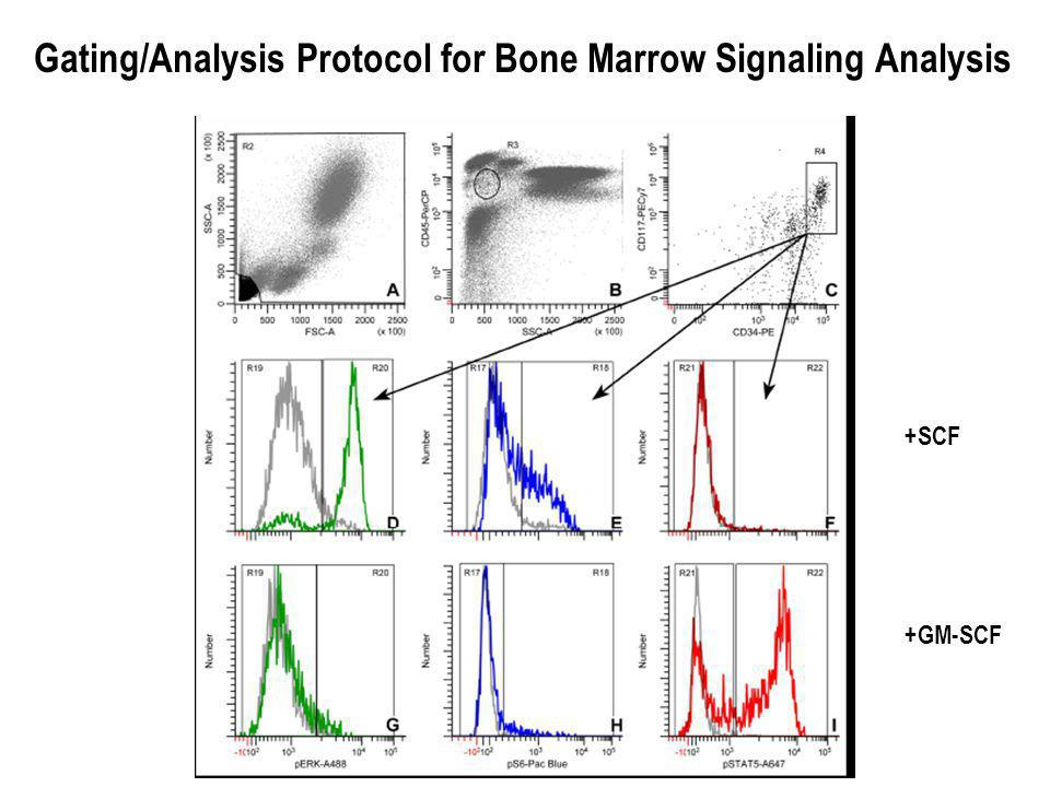 Gating/Analysis Protocol for Bone Marrow Signaling Analysis +SCF +GM-SCF