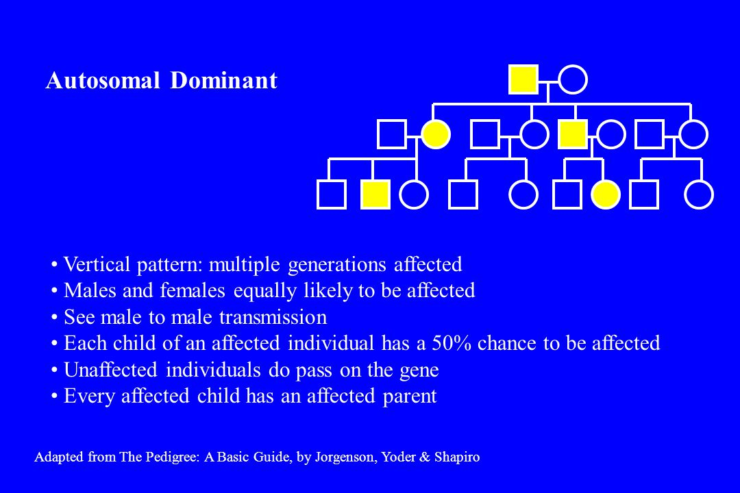 Adapted from The Pedigree: A Basic Guide, by Jorgenson, Yoder & Shapiro An individual who inherits the disease gene does not develop the disorder The disorder appears to skip generations Autosomal Dominant Non-Penetrance