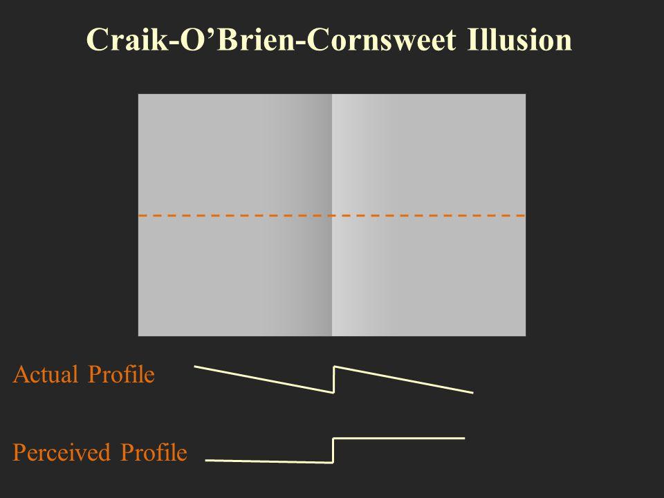 Craik-OBrien-Cornsweet Illusion Actual Profile Perceived Profile