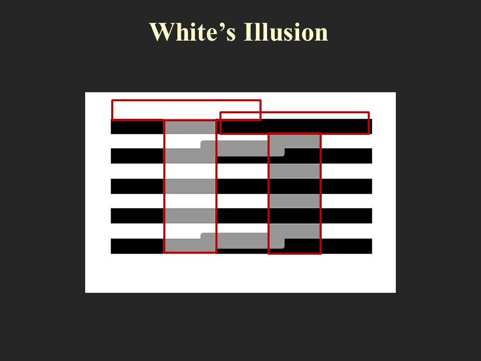 Whites Illusion