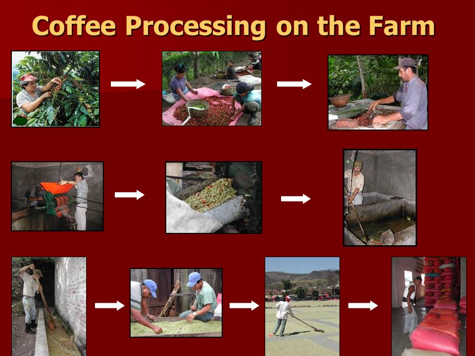 Coffee Processing on the Farm