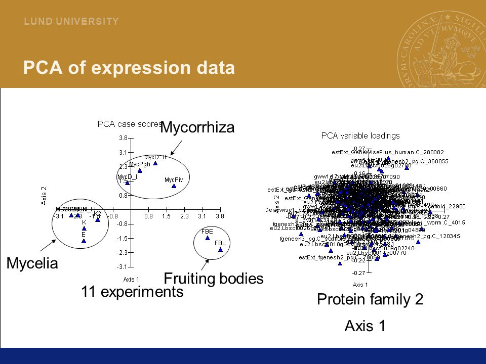 13 L U N D U N I V E R S I T Y PCA of expression data Protein family 2 11 experiments Mycelia Mycorrhiza Fruiting bodies Axis 1