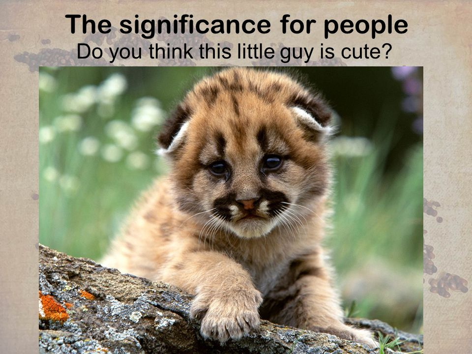 The significance for people Do you think this little guy is cute?