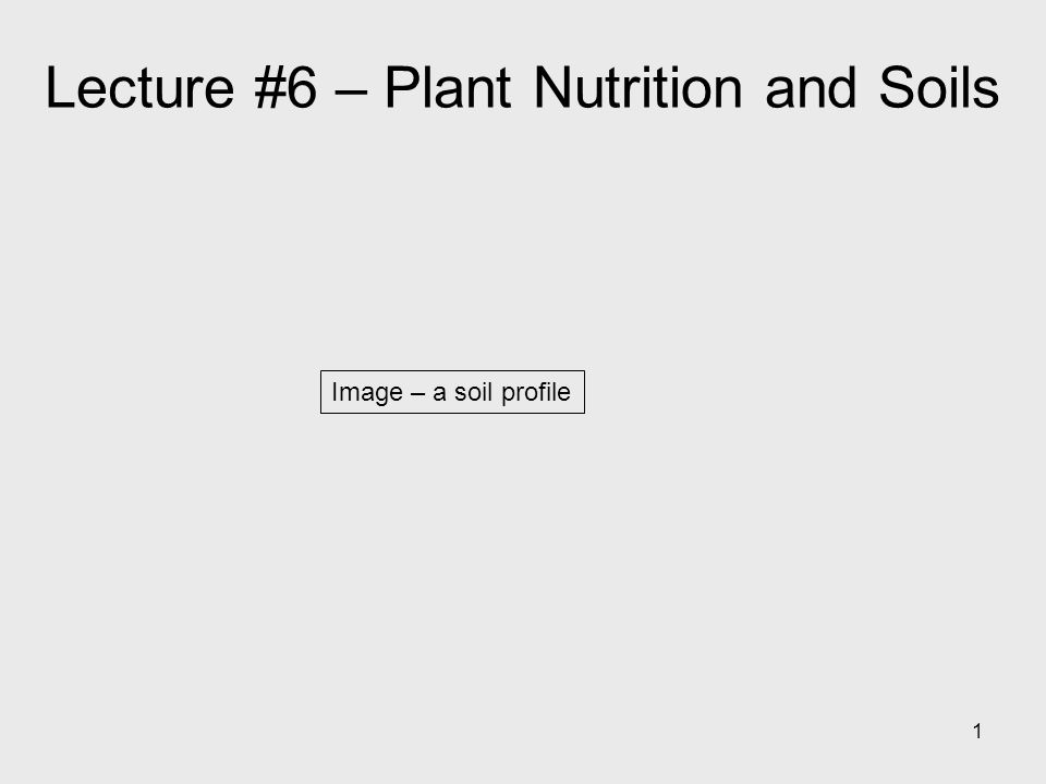1 Image – a soil profile Lecture #6 – Plant Nutrition and Soils