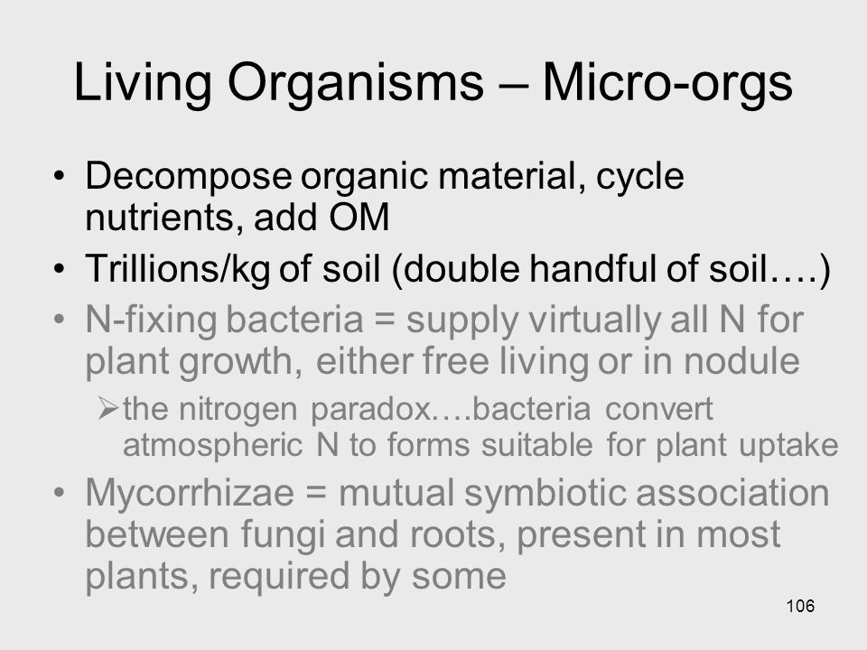 106 Living Organisms – Micro-orgs Decompose organic material, cycle nutrients, add OM Trillions/kg of soil (double handful of soil….) N-fixing bacteria = supply virtually all N for plant growth, either free living or in nodule the nitrogen paradox….bacteria convert atmospheric N to forms suitable for plant uptake Mycorrhizae = mutual symbiotic association between fungi and roots, present in most plants, required by some