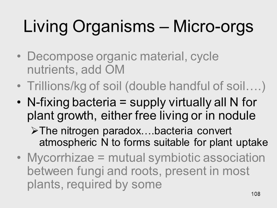 108 Living Organisms – Micro-orgs Decompose organic material, cycle nutrients, add OM Trillions/kg of soil (double handful of soil….) N-fixing bacteria = supply virtually all N for plant growth, either free living or in nodule The nitrogen paradox….bacteria convert atmospheric N to forms suitable for plant uptake Mycorrhizae = mutual symbiotic association between fungi and roots, present in most plants, required by some