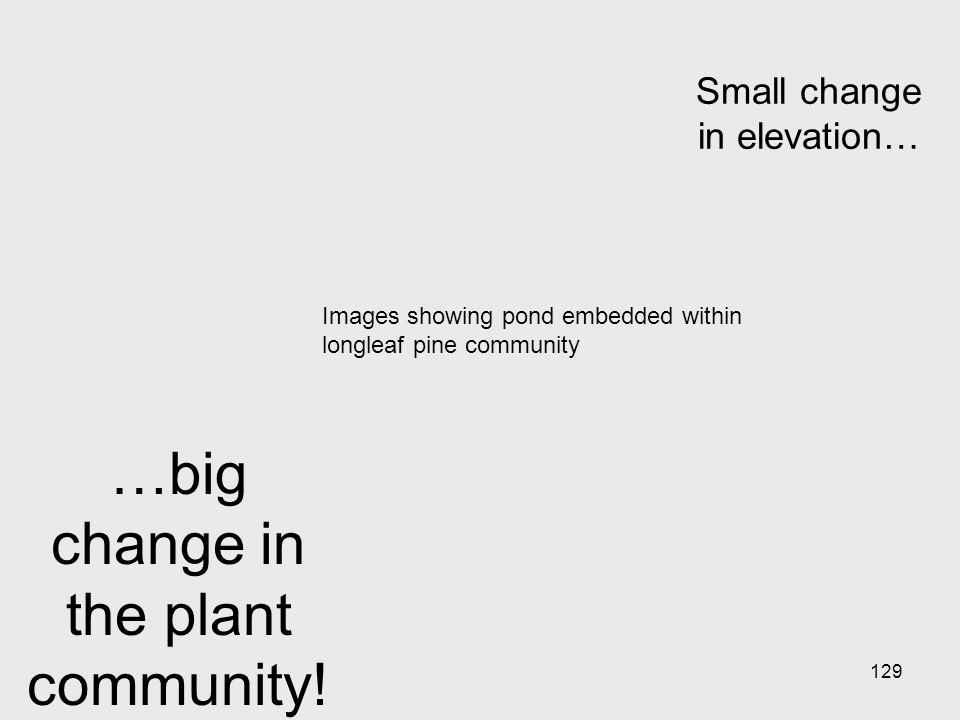129 Small change in elevation… …big change in the plant community.