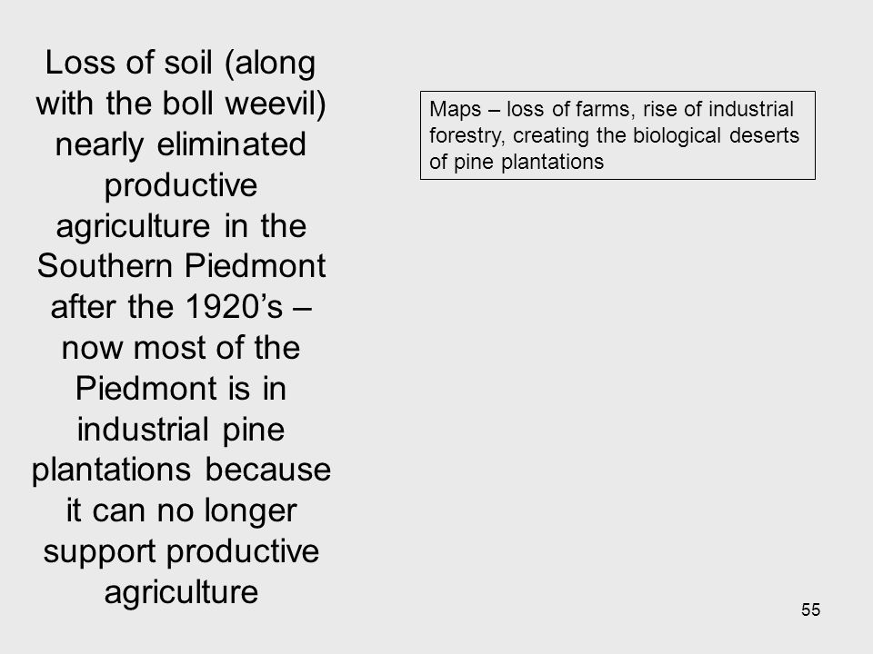 55 Maps – loss of farms, rise of industrial forestry, creating the biological deserts of pine plantations Loss of soil (along with the boll weevil) nearly eliminated productive agriculture in the Southern Piedmont after the 1920s – now most of the Piedmont is in industrial pine plantations because it can no longer support productive agriculture