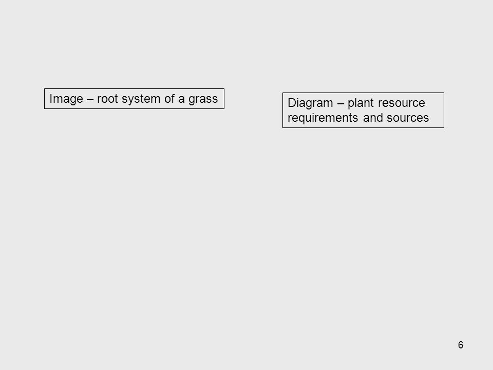 6 Diagram – plant resource requirements and sources Image – root system of a grass