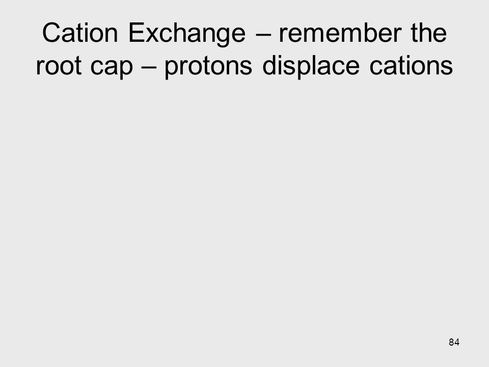 84 Cation Exchange – remember the root cap – protons displace cations