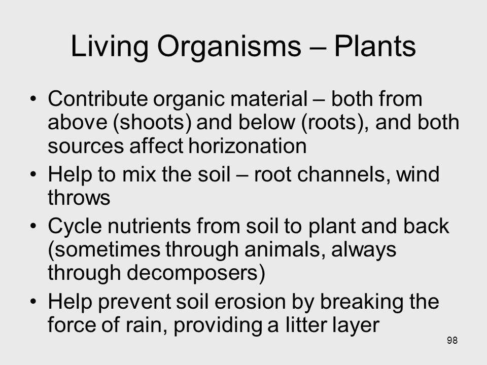 98 Living Organisms – Plants Contribute organic material – both from above (shoots) and below (roots), and both sources affect horizonation Help to mix the soil – root channels, wind throws Cycle nutrients from soil to plant and back (sometimes through animals, always through decomposers) Help prevent soil erosion by breaking the force of rain, providing a litter layer