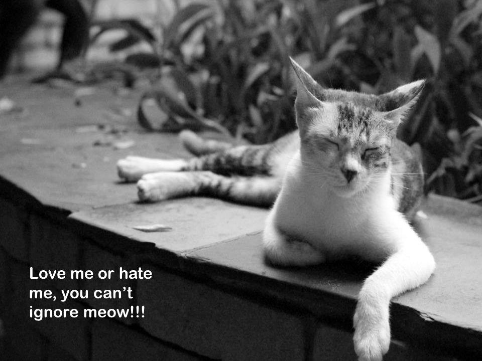 THE LSR CAFE Love em or hate em, you cant ignore em. Love me or hate me, you cant ignore meow!!!