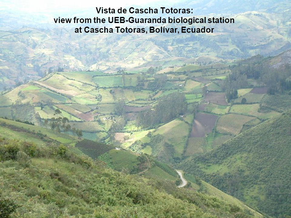 Vista de Cascha Totoras: view from the UEB-Guaranda biological station at Cascha Totoras, Bolívar, Ecuador