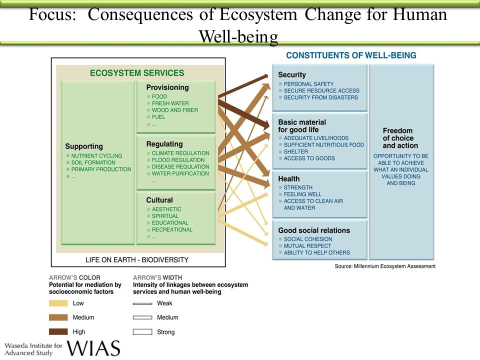 MA Framework Direct Drivers Indirect Drivers Ecosystem Services Human Well-being Direct Drivers of Change Changes in land use Species introduction or removal Technology adaptation and use External inputs (e.g., irrigation) Resource consumption Climate change Natural physical and biological drivers (e.g., volcanoes) Indirect Drivers of Change Demographic Economic (globalization, trade, market and policy framework) Sociopolitical (governance and institutional framework) Science and Technology Cultural and Religious Human Well-being and Poverty Reduction Basic material for a good life Health Good Social Relations Security Freedom of choice and action