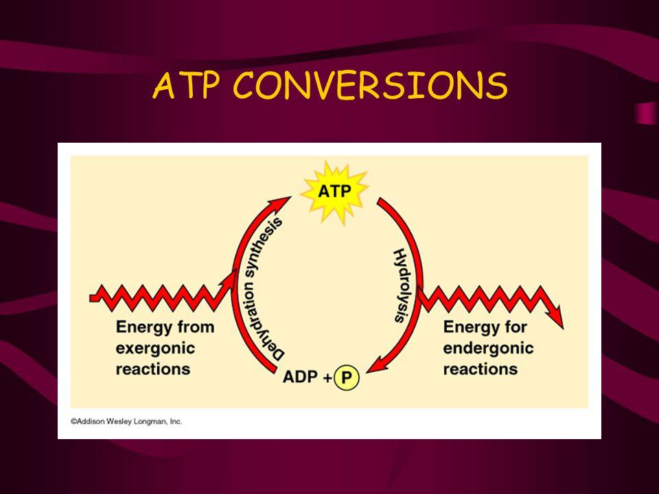 ATP CONVERSIONS