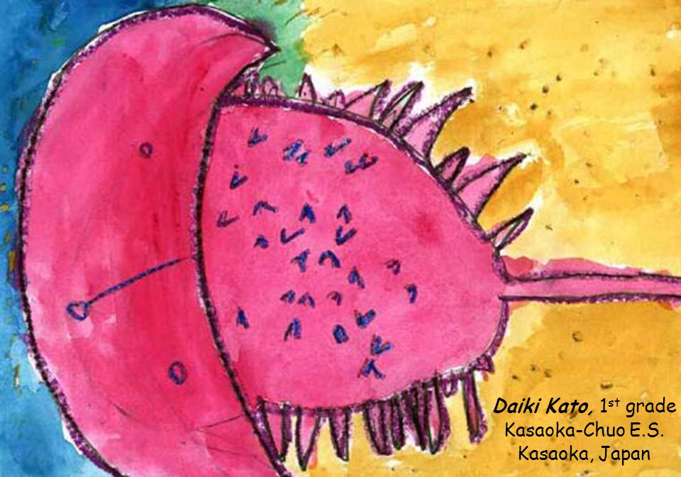 Art: Chen Xi, Grade 6, Convent of the Holy Infant Jesus, Kellock, Singapore Poem: Elvira Catalina Vázquez Ávila, Grade 4, Loyola Comunidad Educativa, Mérida, Yucatán, México C A C E R O L I T A little saucepan C ada caerolita es muy importante every horseshoe is very important A l ser un lindo animal as it is a beautiful animal C olor cafe brown in color E legantemente, las hembras son mas grandes que los machos elegantly, females are larger than males R aramente las encuentras en las rarely you will find them by the O rillas del mar sea shores L as cacerolitas de mar horseshoe crabs I nteligentemente pueden detectar el can smartly detect T iempo time A iyudanos a que no se extingua help us to prevent their extinction