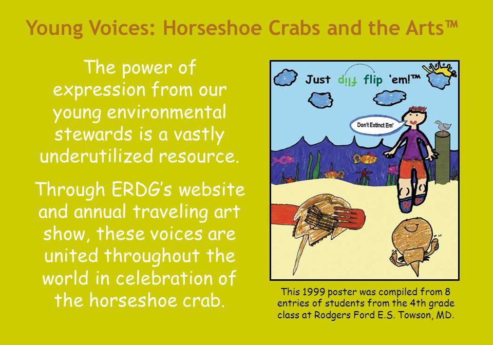 www.horseshoecrab.org