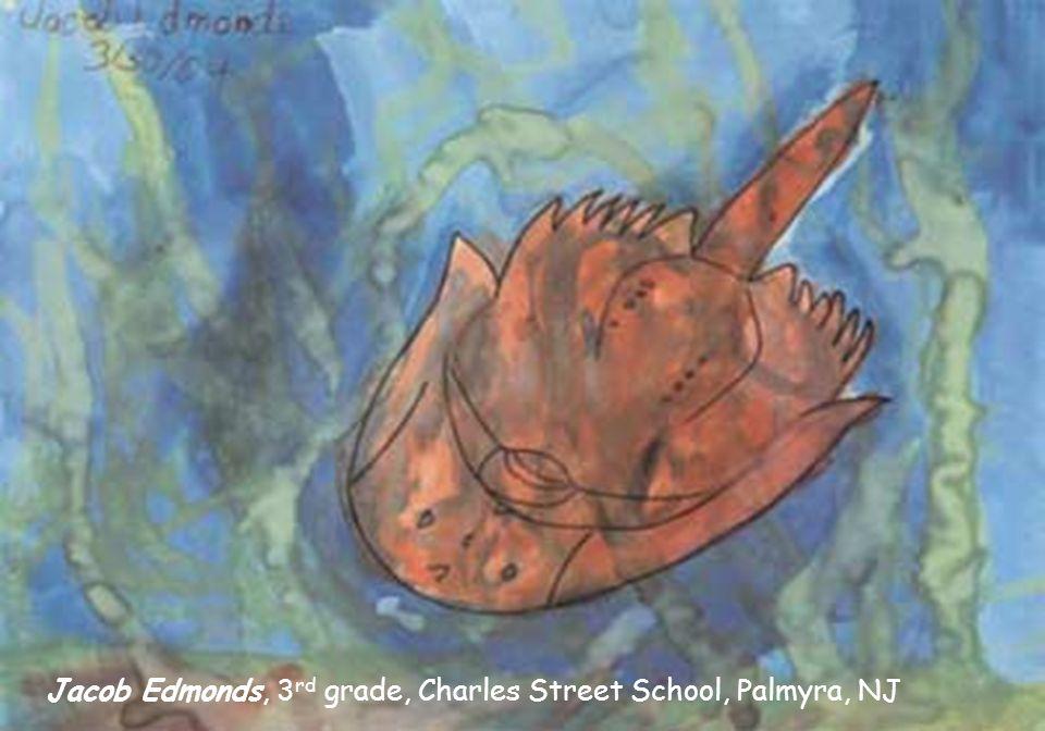 Kota Sakai, grade 4, Kanaura Elementary., Kasaoka, Japan Megan Brennan, grade 4, Memorial School, Cinnaminson, NJ