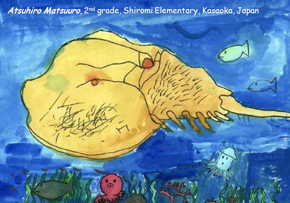 Rebecca Siple, 2 nd grade, Wilmington Montessori School, Wilmington, DE Shota Sakai, grade 8, Kanaura Junior High School, Kasaoka, Japan