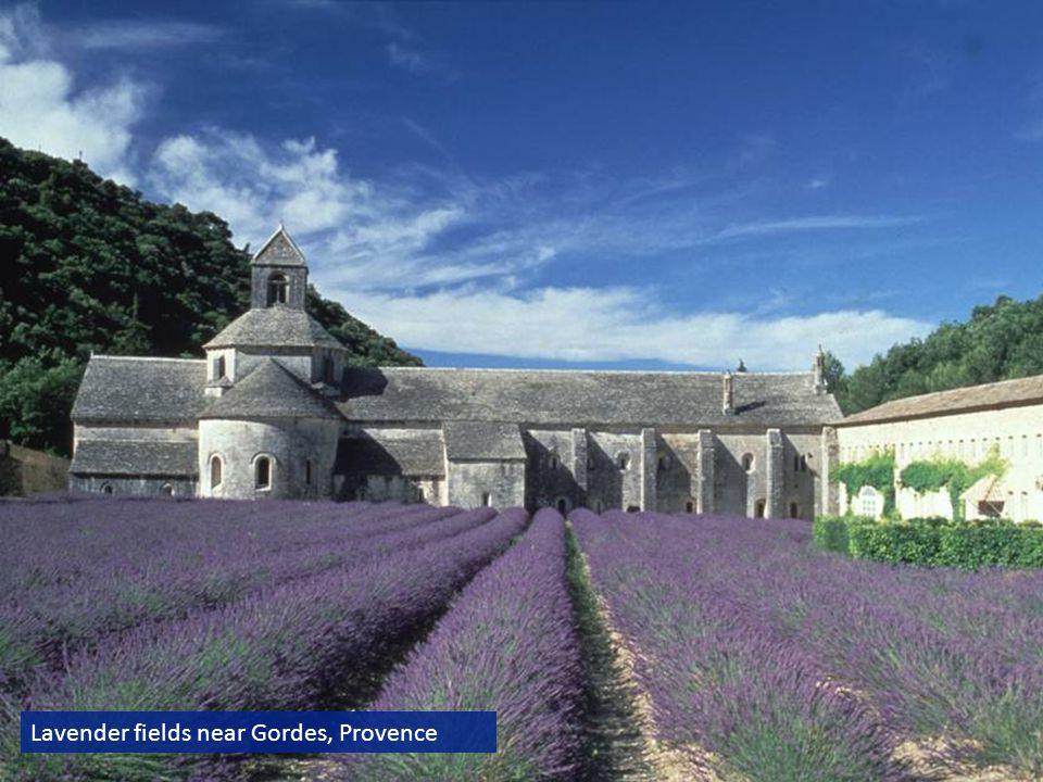 Lavender fields near Gordes, Provence