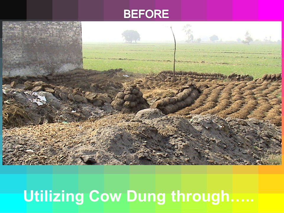 Utilizing Cow Dung through…..