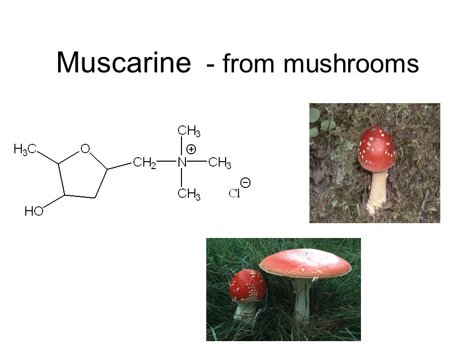 Muscarine - from mushrooms