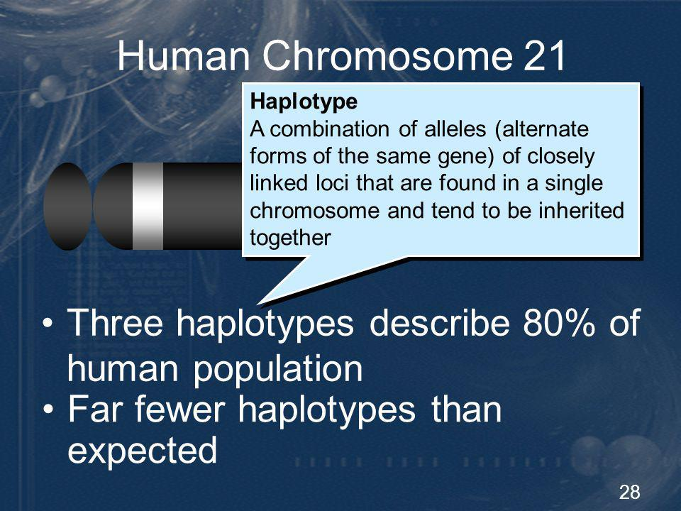 28 Human Chromosome 21 Diversity Three haplotypes describe 80% of human population Haplotype A combination of alleles (alternate forms of the same gen