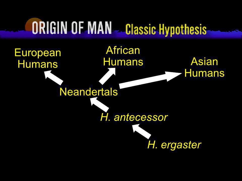 4 Origin of Man Classic Hypothesis Neandertals H. antecessor H. ergaster European Humans African Humans Asian Humans
