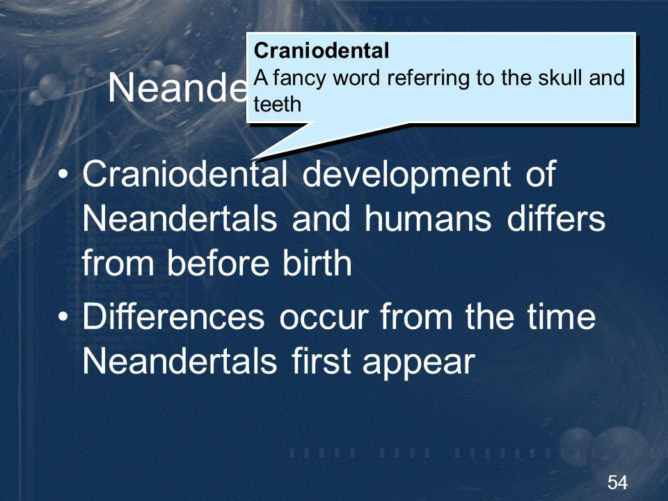 54 Neandertal Development Craniodental development of Neandertals and humans differs from before birth Craniodental A fancy word referring to the skul
