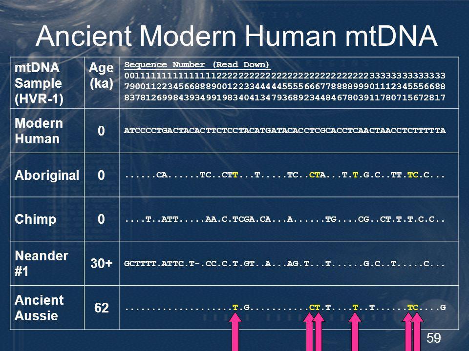 59 Ancient Modern Human mtDNA mtDNA Sample (HVR-1) Age (ka) Sequence Number (Read Down) 00111111111111111222222222222222222222222222233333333333333 79