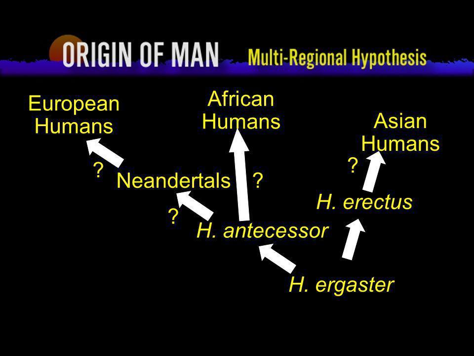 62 Origin of Man Multi-regional Hypothesis H. ergaster Asian Humans ? African Humans ? H. erectus H. antecessor Neandertals ? European Humans ?