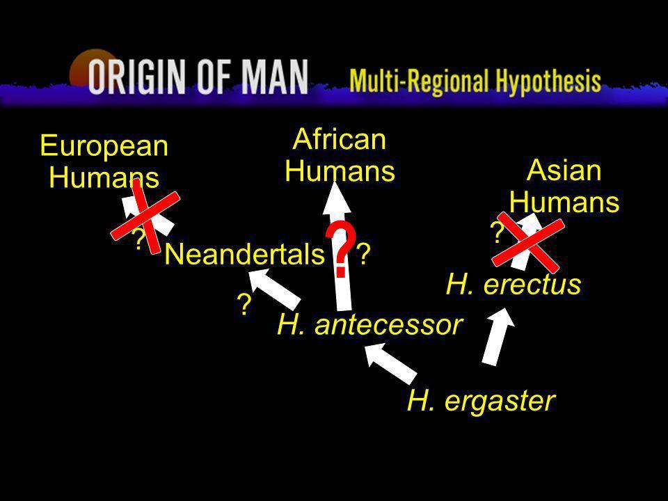 68 Origin of Man Multi-regional Hypothesis H. ergaster Asian Humans ? African Humans ? H. erectus H. antecessor ? ? Neandertals European Humans