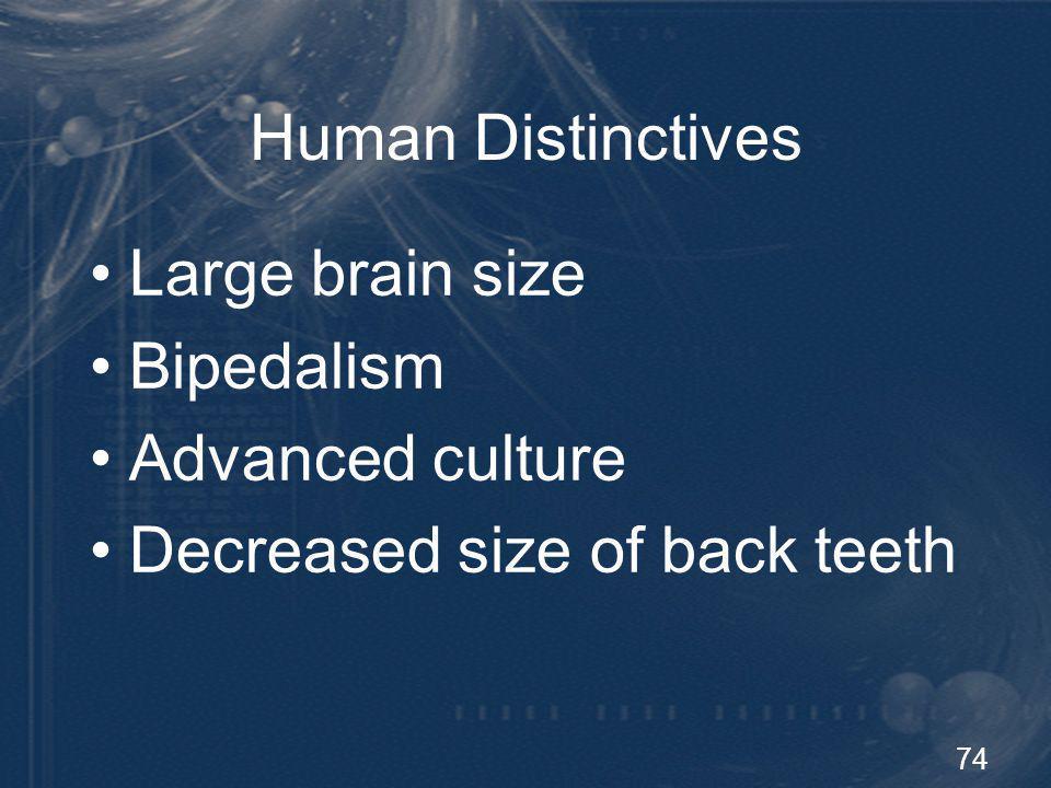 74 Human Distinctives Large brain size Bipedalism Advanced culture Decreased size of back teeth
