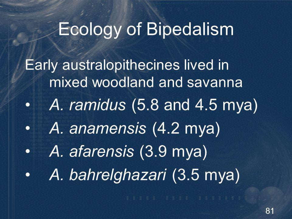 81 Ecology of Bipedalism Early australopithecines lived in mixed woodland and savanna A. ramidus (5.8 and 4.5 mya) A. anamensis (4.2 mya) A. afarensis