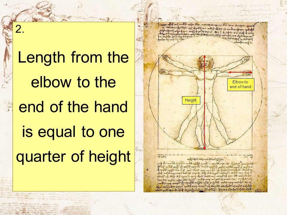 2. Length from the elbow to the end of the hand is equal to one quarter of height Height Elbow to end of hand