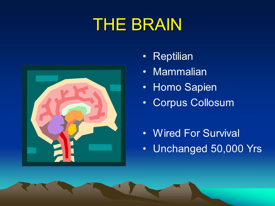 THE BRAIN Reptilian Mammalian Homo Sapien Corpus Collosum Wired For Survival Unchanged 50,000 Yrs