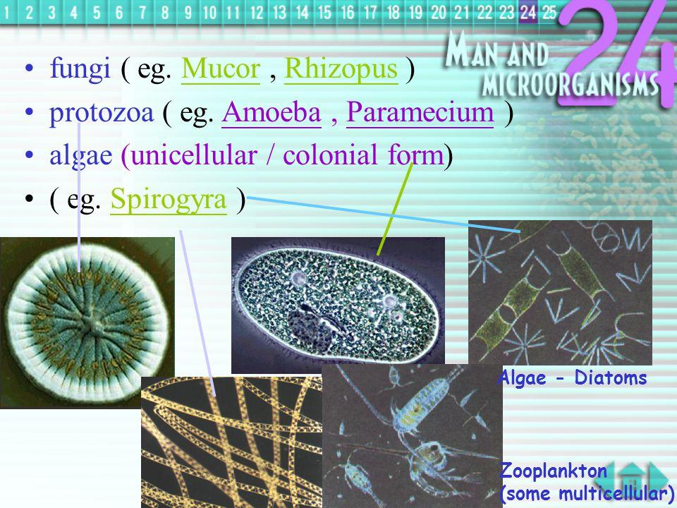 Types of Micro-organisms Bacteria Viruses Fungi Protozoa