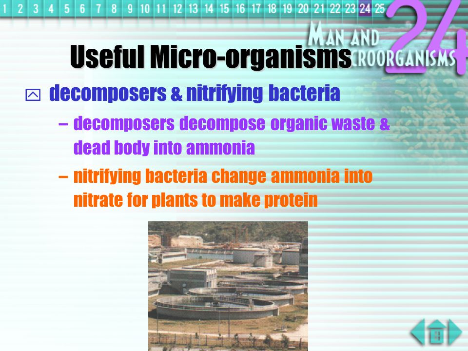 decomposers & nitrifying bacteria –decomposers decompose organic waste & dead body into ammonia –nitrifying bacteria change ammonia into nitrate for plants to make protein Useful Micro-organisms