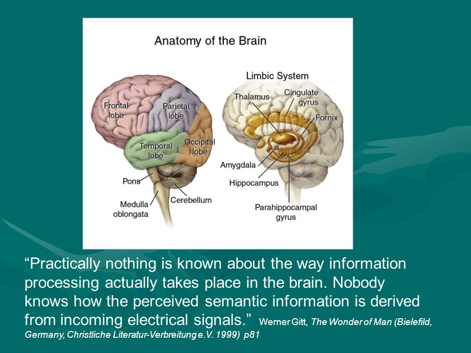 Practically nothing is known about the way information processing actually takes place in the brain. Nobody knows how the perceived semantic informati