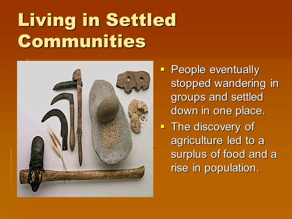 Taming Animals and Sowing Seeds By carefully selecting and sowing seeds of productive plants, people influenced the plants in their environment.