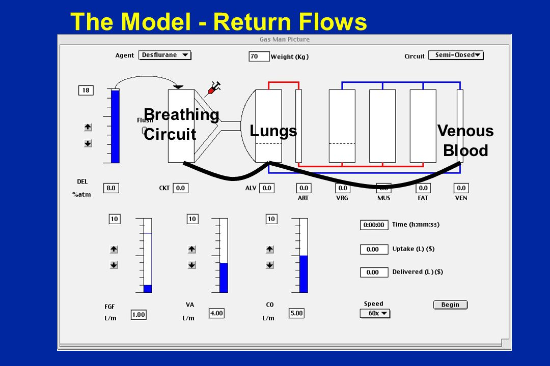 The Model - Return Flows Breathing Circuit LungsVenous Blood