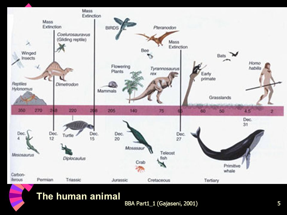 BBA Part1_1 (Gajaseni, 2001)5 The human animal