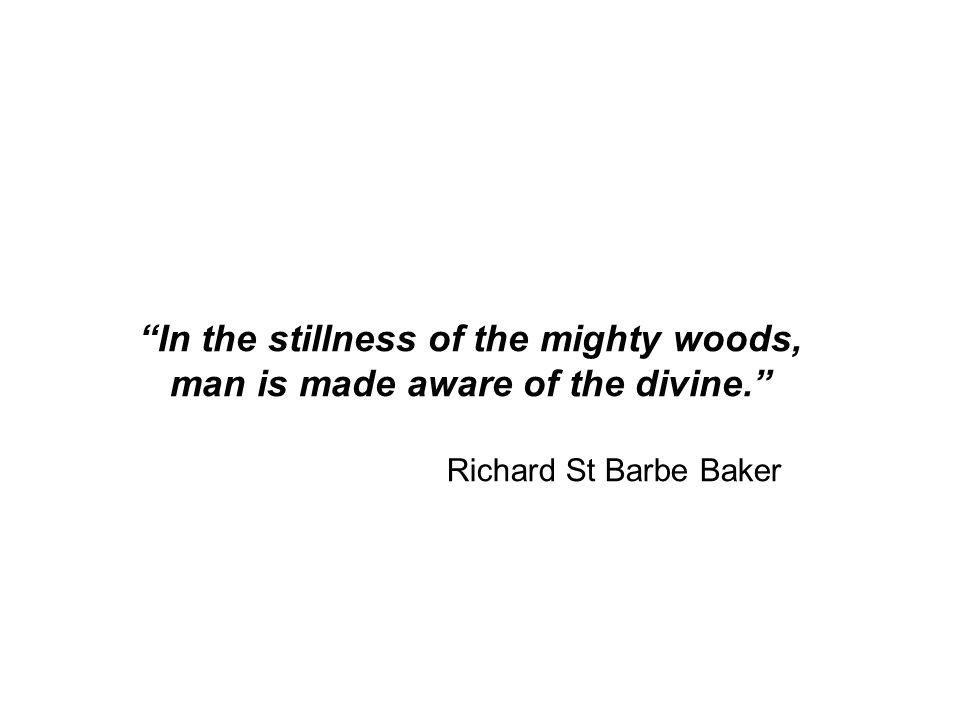 In the stillness of the mighty woods, man is made aware of the divine. Richard St Barbe Baker