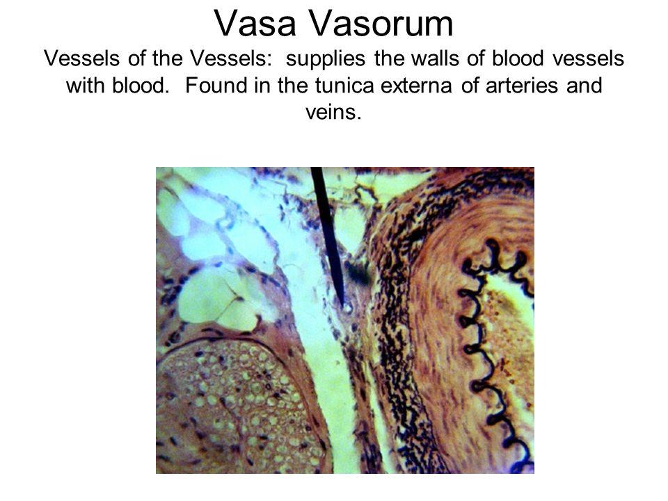 LEFT Subclavian Artery Axillary Artery Brachial Artery PRACTICE!